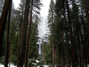 Yosemite forest view. Click to enlarge.