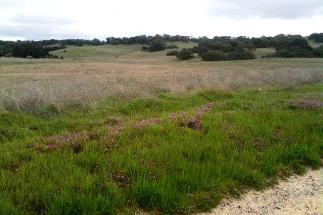 Santa Rosa Plateau landscape.