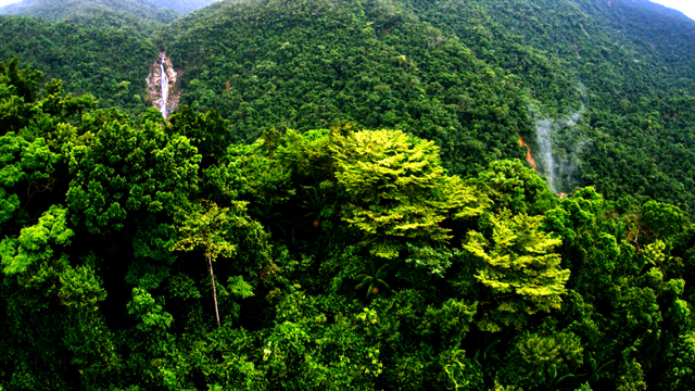 Mountain Pine Ridge. Photo courtesy Belize Tourism Board