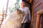 Frank Wendland, founder of the Wolf Sanctuary steps out of his office to greet his chosen ambassador wolf.