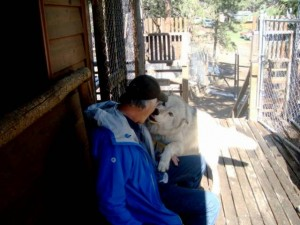 Yikes. This is how an ambassador wolf greets a human. Very gentle, powerful, and confident she wolf, this one is.