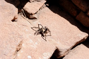 We also got to see a tarantula as we scrambled up the side of the bridge, back to the top of the highway.